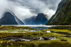 Sunlight breaks through storm clouds. Marshy, shallow, overgrown with marsh grass coast of the fjord. New Zealand - magic land. Concept of exotic, active and stock photos