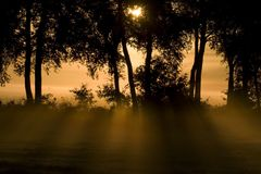 Sunlight breaks through the trees. Back on an early morning in Wijster; Netherland Royalty Free Stock Image