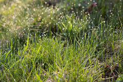 Sunlight and bright dew on green grass Stock Photos