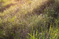 Sunlight and bright dew on green grass Stock Images