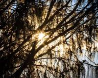 Sunlight Burst Through Trres Stock Photo