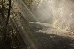 Sunlight bursting through forest Royalty Free Stock Image