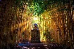 Sunlight busting thru Bamboo. Illuminating Holy Statue stock photography