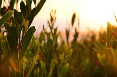 Sun web Stock Photography