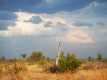 Sunlight and clouds on african savannah, Kruger, South Africa Royalty Free Stock Image