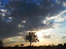 Sunlight and clouds, Kruger, South Africa Stock Photos