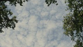 Sunlight Cloudy Sky Through the Trees. Stedy shot Sunlight Cloudy Sky Through the Trees stock footage