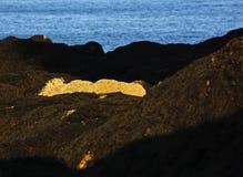 Sunlight Coastal Rocks Plant Life Royalty Free Stock Photos