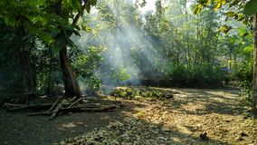 When sunlight come into Forest stock photo