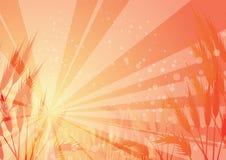 Sunlight through cornfield Royalty Free Stock Images