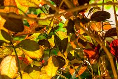 The sunlight creates interesting shadows. Sunlight hitting a colorful plant and creating interesting patterns with the shadows stock photos