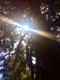 Sunlight creeping through the trees royalty free stock photography