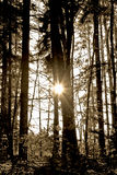 Sunlight in the dark. This image shows a sun in a dark forest royalty free stock photography