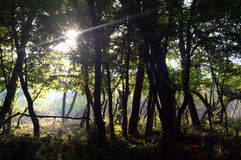Sunlight in dark forest Stock Photos