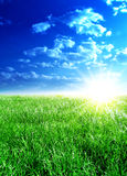 Sunlight day Stock Images