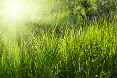 Sunlight in deep forest Royalty Free Stock Images