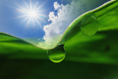 Sunlight  and dew Royalty Free Stock Images