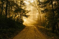 Sunlight on dirt path in forest Stock Images