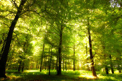Sunlight in early autumn Royalty Free Stock Photos