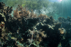 Sunlight and Edge of Coral Reef Stock Images