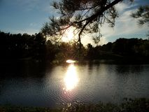 Sunlight Through the Evergreen Branch. The sun dips toward the horizon, casting a bright reflection across the lake at Vastwood Park, in Hawesville, Kentucky royalty free stock photo