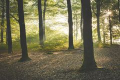 Sunlight falling through calm autumn forest at Amerongen royalty free stock image
