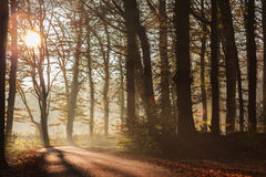 Sunlight falls on a forest road Royalty Free Stock Photo