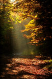Sunlight falls on a forest road in autumn Royalty Free Stock Image