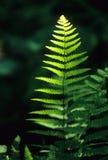 Sunlight on fern stock photo