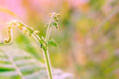 The sunlight on ferns. New fern in the rainforest under light of sunset Stock Images