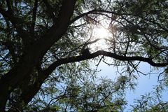Sunlight Filtered through the Branches royalty free stock photos