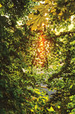 Sunlight filtering through the leaves of the trees, on a sunny summer evening on the banks of the Volga River Yurmanskogo Bay (Rus Royalty Free Stock Images