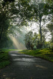 Sunlight filtering through trees. With a road leading into the distance Stock Photos