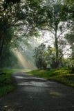 Sunlight filtering through trees Stock Photos