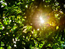 Sunlight flair with leaves stock photography