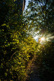Sunlight flare with leaves and bushes Stock Images