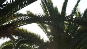 Sunlight flashing through a branch of palm tree stock video
