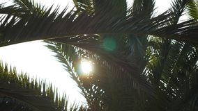 Sunlight flashing through a branch of palm tree stock video footage