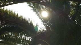 Sunlight flashing through a branch of palm tree stock footage