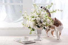 Sunlight Flower and Cat. The Sunlight this morning ,and beautiful flower and so cute cat Stock Images