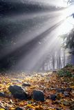 Sunlight in the fog Stock Photo