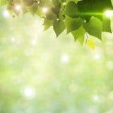 Sunlight through foliage Stock Image