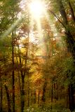 Sunlight in Forest. Sunlight shines in autumn forest Comments always welcome Stock Photo