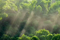 Sunlight in forest Royalty Free Stock Image