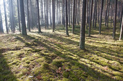 Sunlight in the forest Stock Photography