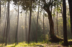 Sunlight in forest stock photos