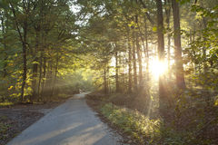 Sunlight forest Royalty Free Stock Photography
