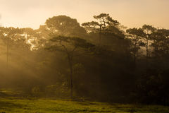 Sunlight forest Stock Images