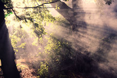 The sunlight. In the forest Royalty Free Stock Images