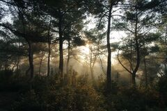 Sunlight in forest Royalty Free Stock Photography
